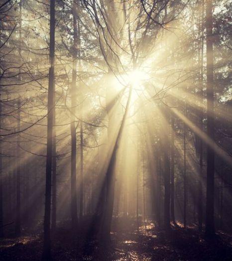 Stiller Wald Licht